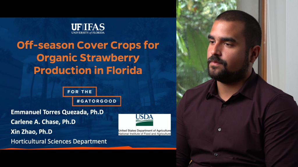 Off-season Cover Crops for Organic Strawberry Production in Florida
