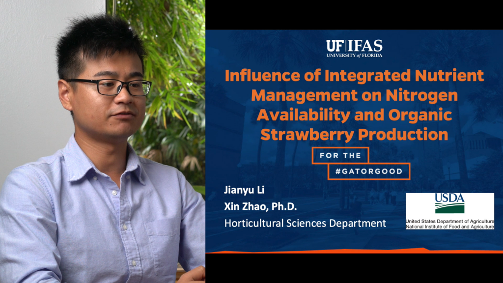 Influence of Integrated Nutrient Management on Nitrogen Availability and Organic Strawberry Production